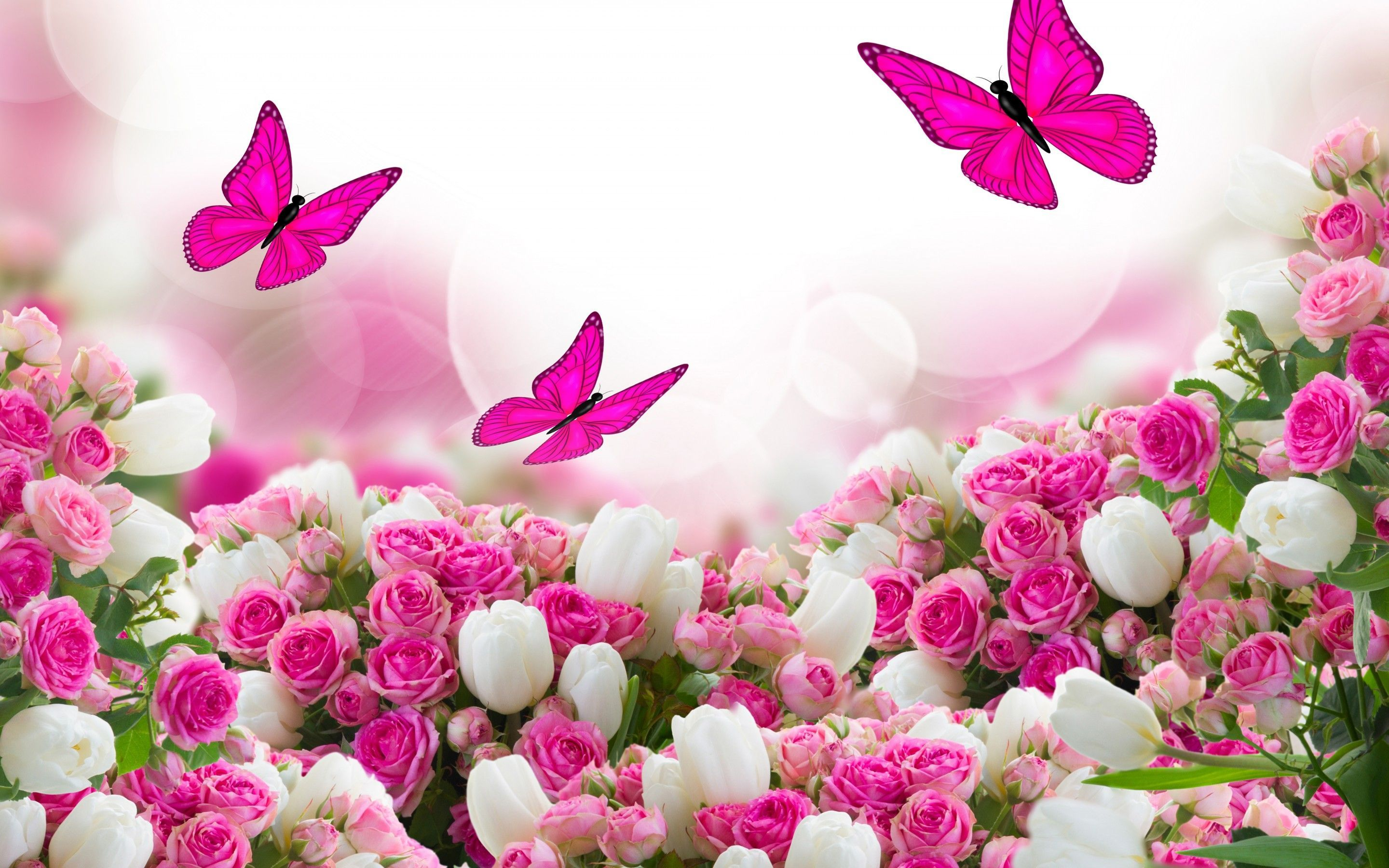 Flower pink rose gallery 560457989 wallpaper for free awesome flower pink rose pics dhlflorist Choice Image