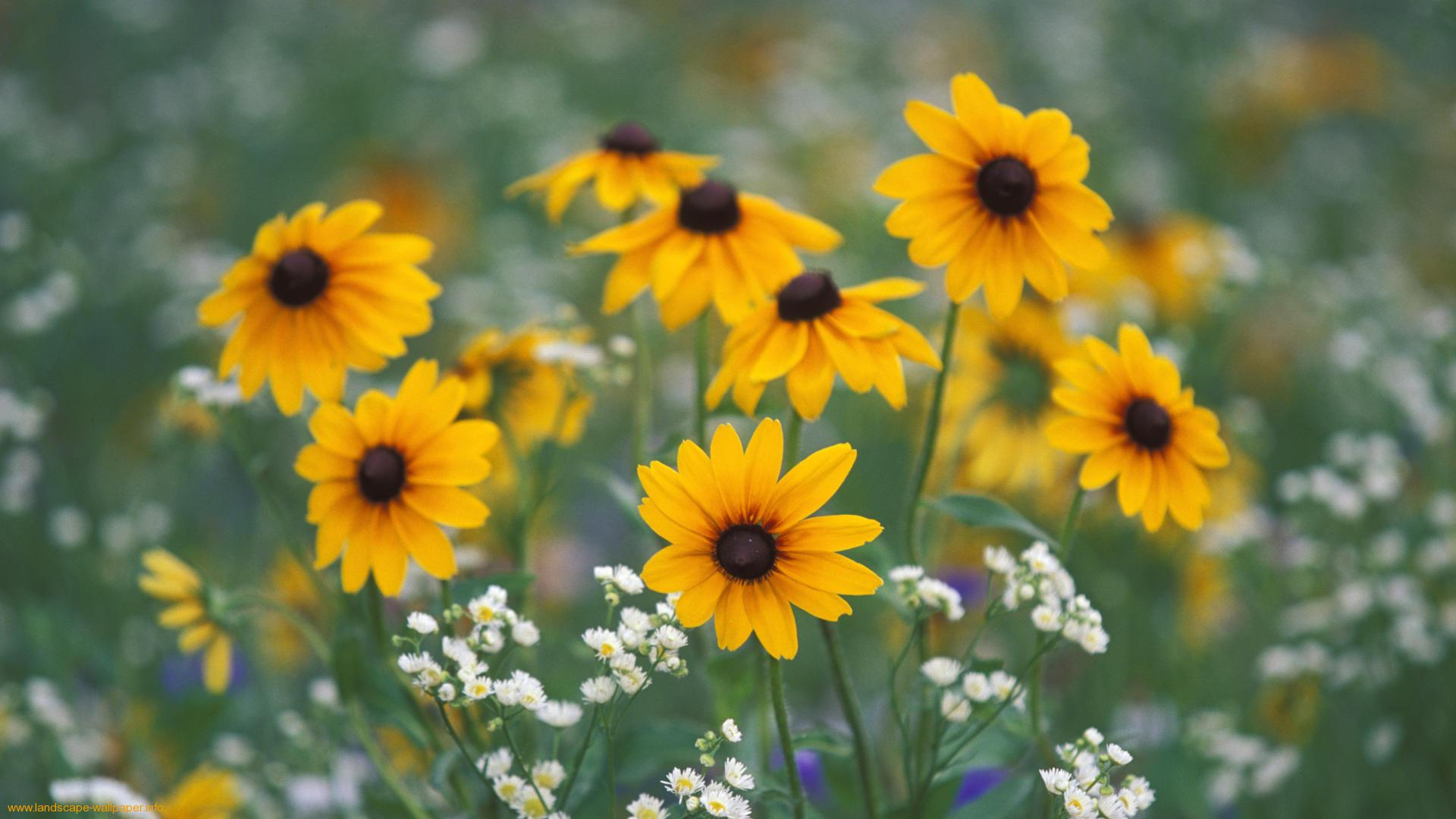 widescreen wild flowers, by krastyu craufurd, Beautiful flower