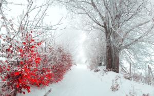 Images Of Winter Flower
