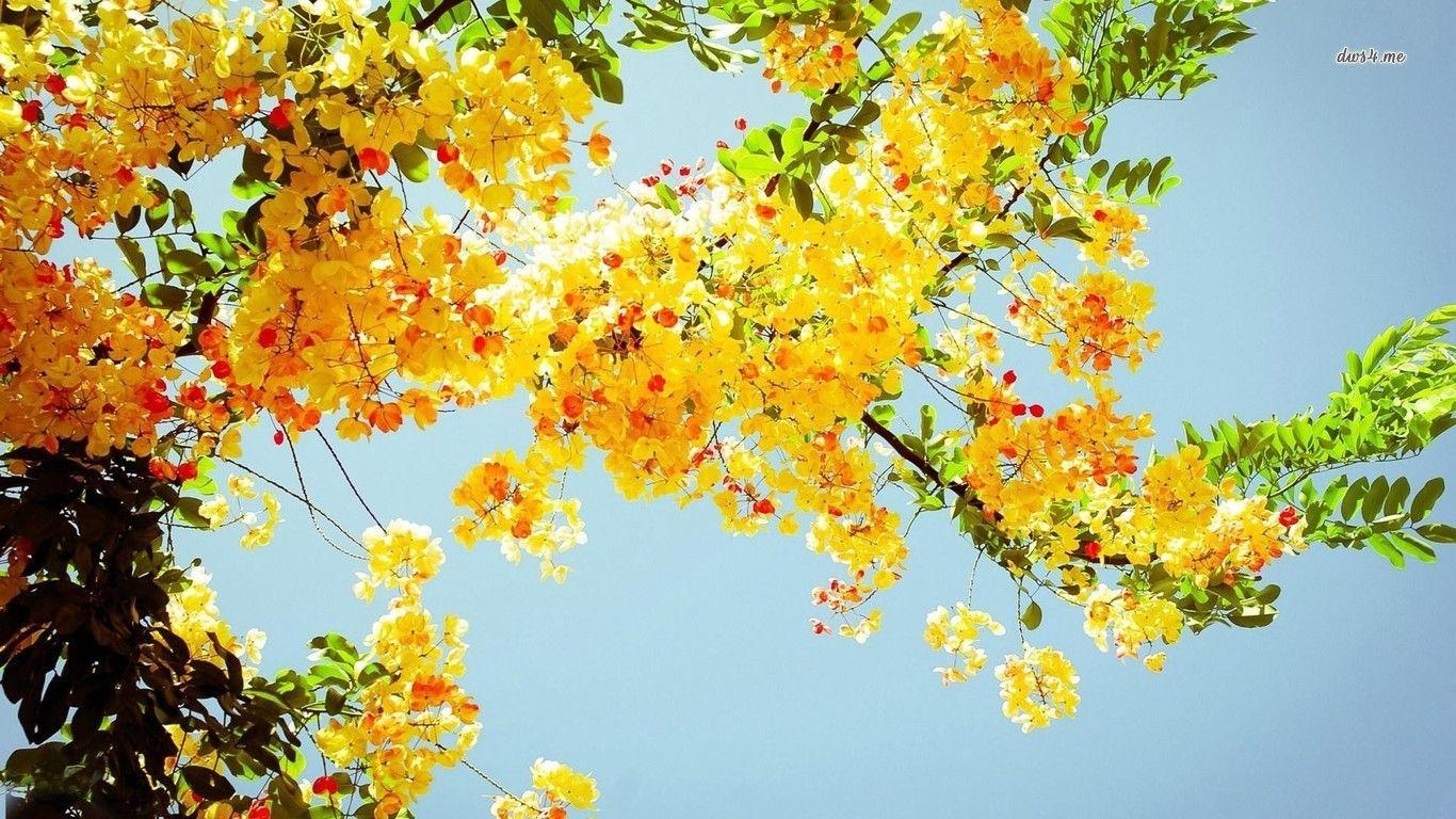 Hd wallpaper yellow flowers - Hd Yellow Flower 4k Wallpapers 1366x768 0 247 Mb
