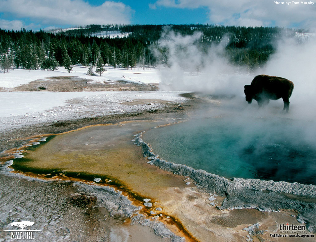 yellowstone-wallpapers