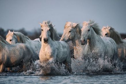 7 Running Horses Wallpaper