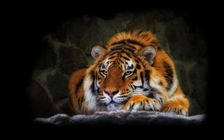 Abstract Tiger Image