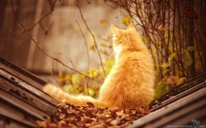 Autumn Cat Pic