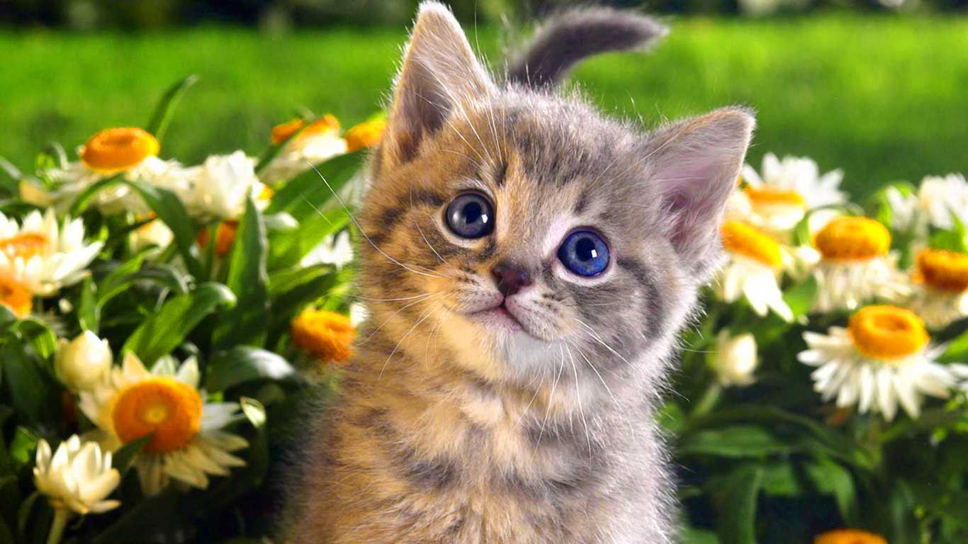 Best Baby Cat Photos And Pictures Baby Cat Widescreen Wallpapers