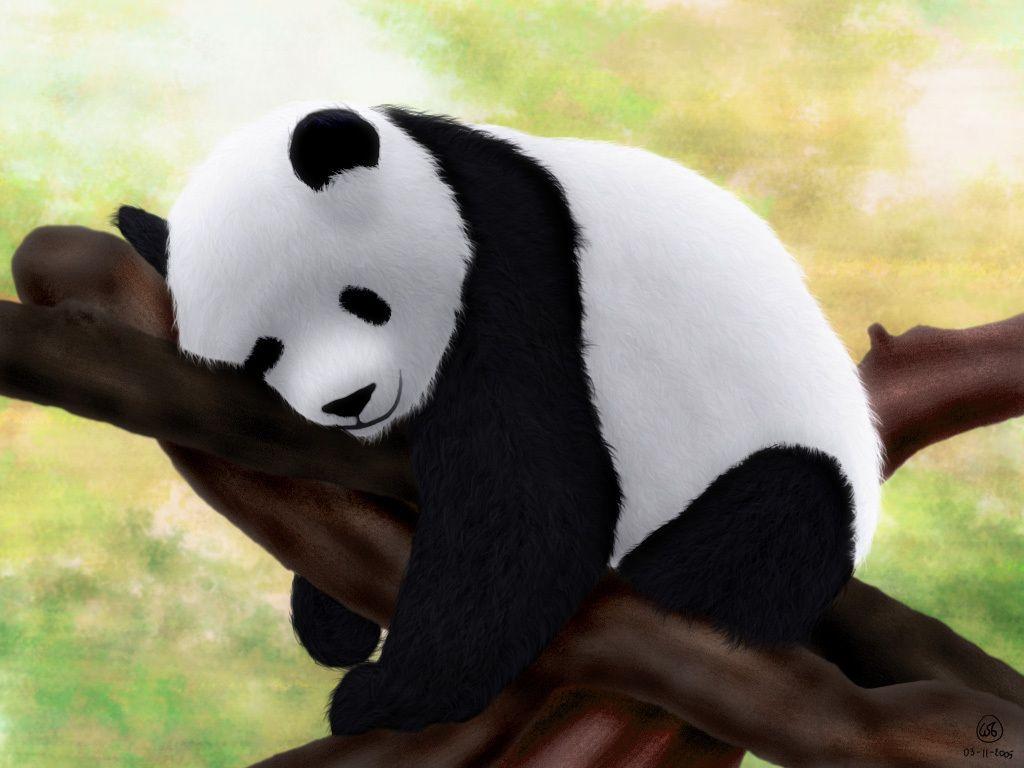 30 Baby Panda Image Baby Panda Wallpapers Anacleto Duchateau