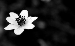 Black And White Flower Pics