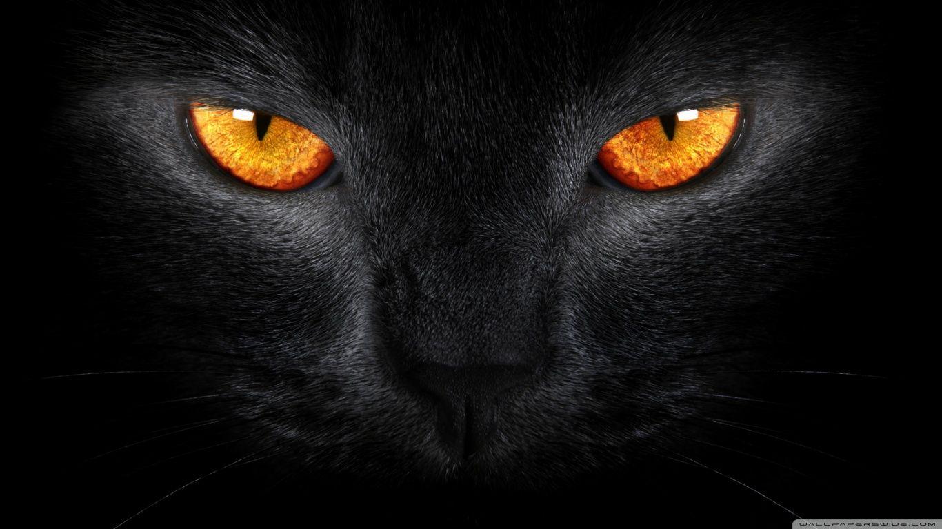 Black Cat Computer Wallpapers Black Cat Photos