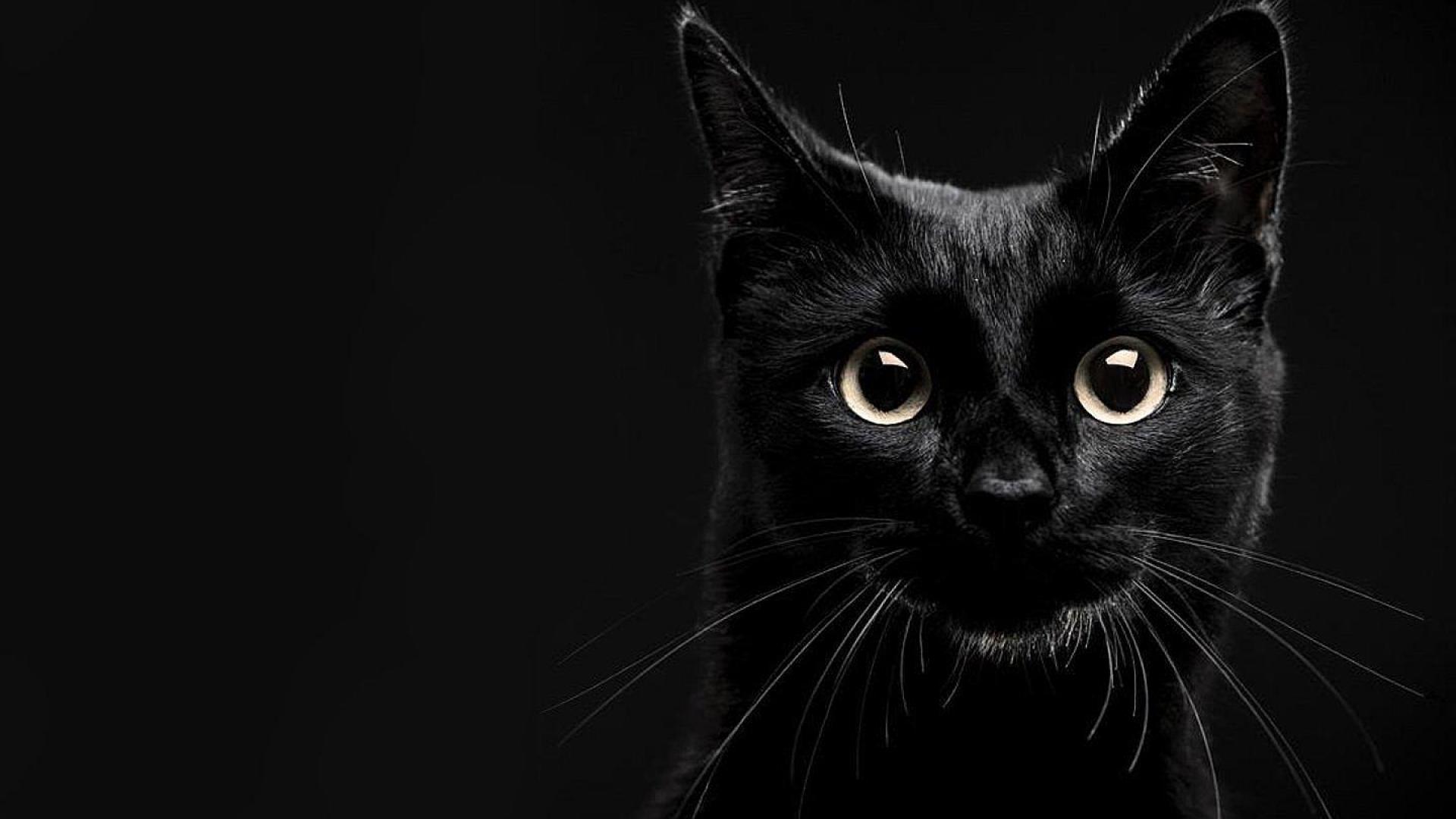 Cool Black Cat Image In 4k Ultra Hd