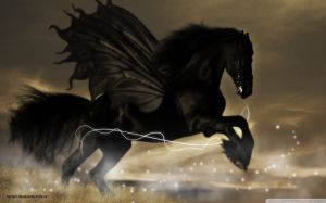 Pictures Of Black Horse