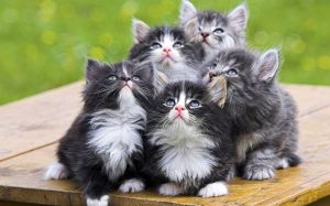 Cat Wallpaper