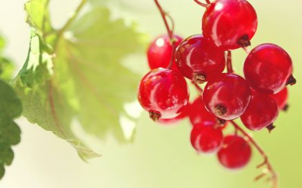 Images Of Cherry Red