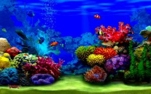 Colorful Fish Image