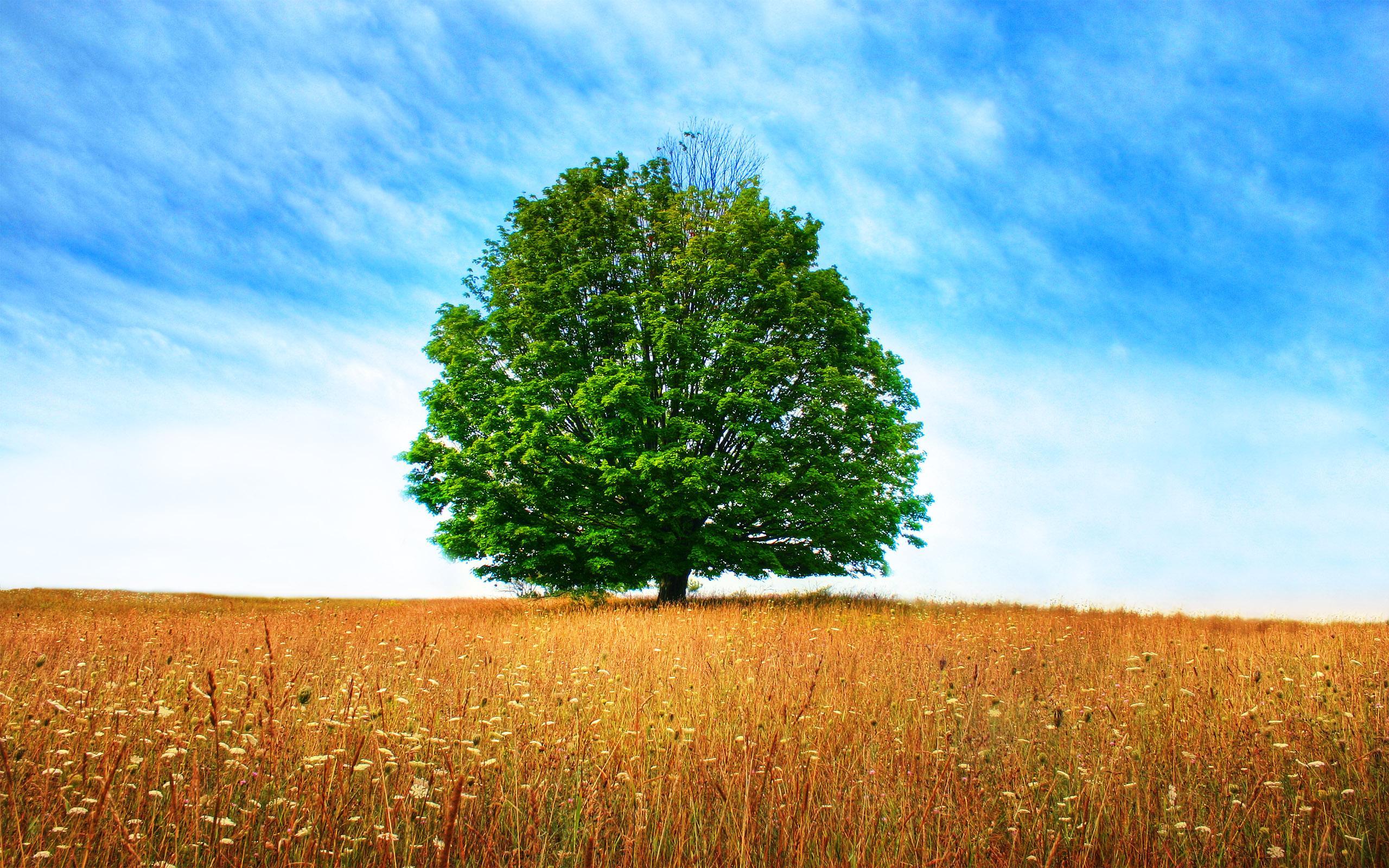 Tree Wallpapers - Nasib Mildenhall