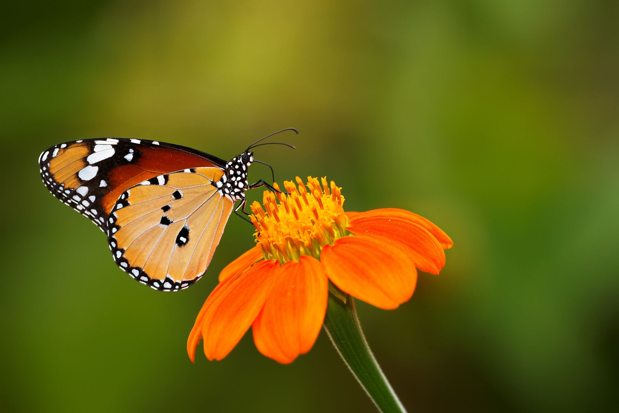 Butterfly Hd Widescreen Wallpapers For Free