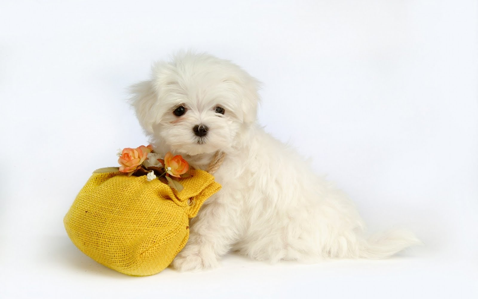 cute-dog-wallpapers-for-desktop