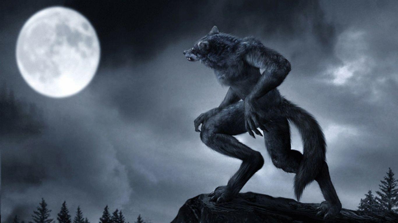 desktop wallpaper wolf 013
