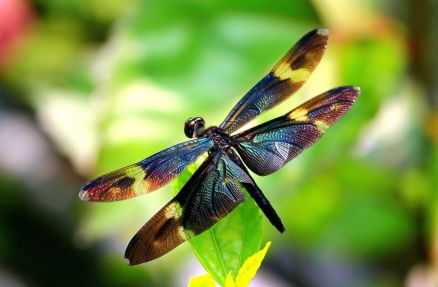 Images Of Dragonfly
