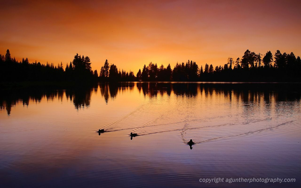 Widescreen Wallpapers Of Duck Hunting Cool Images