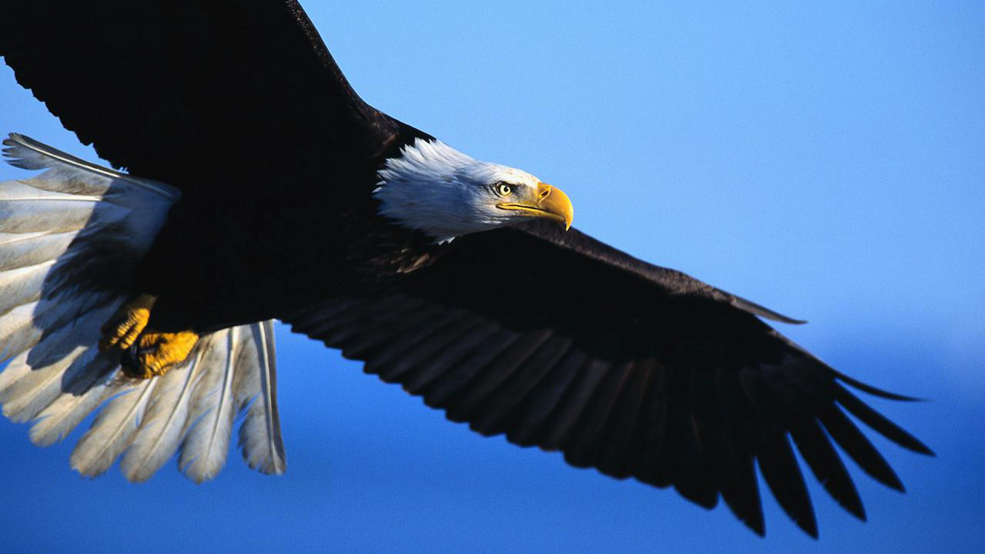 Hd Quality Creative Eagle Pictures