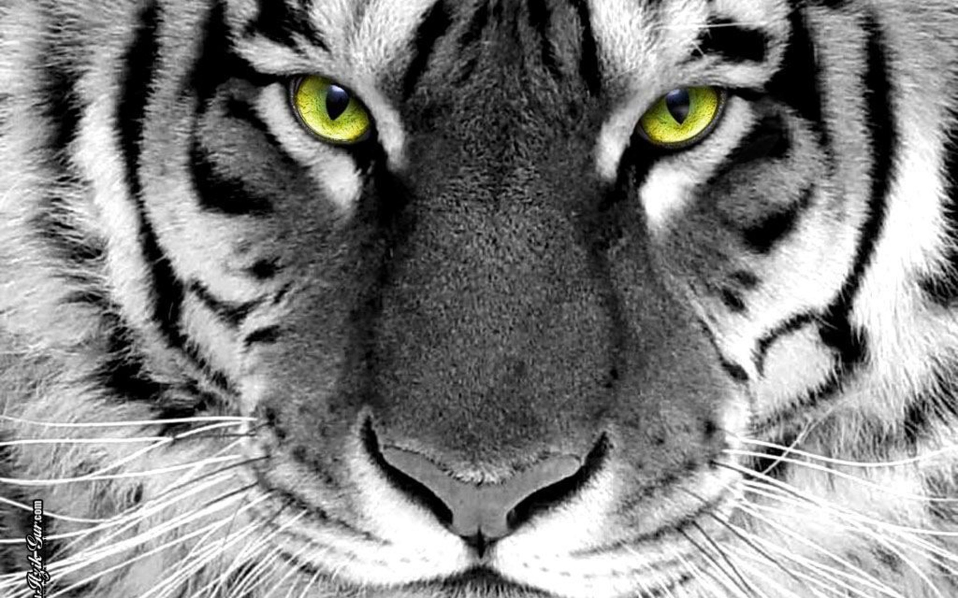 fantasy-tiger-wallpaper