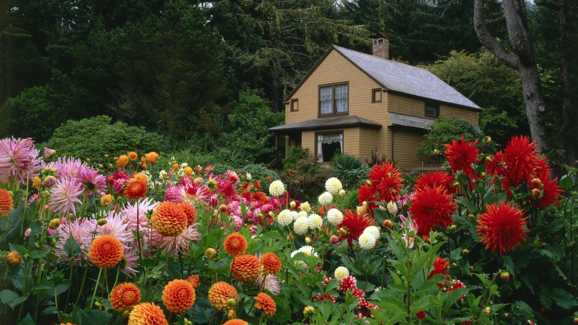 Flower Garden Hd Photos 577665490 Enid Drover
