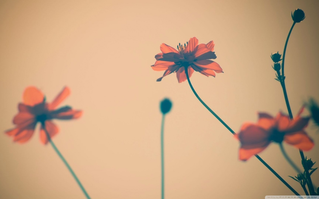 High Definition Flower Tumblr Wallpaper Hdq Cover Pic