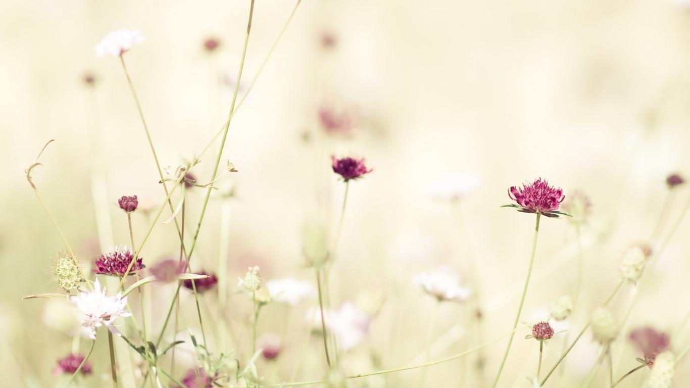 flower wallpaper tumblr 004