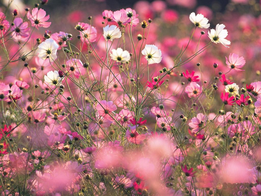 flower wallpaper tumblr 021