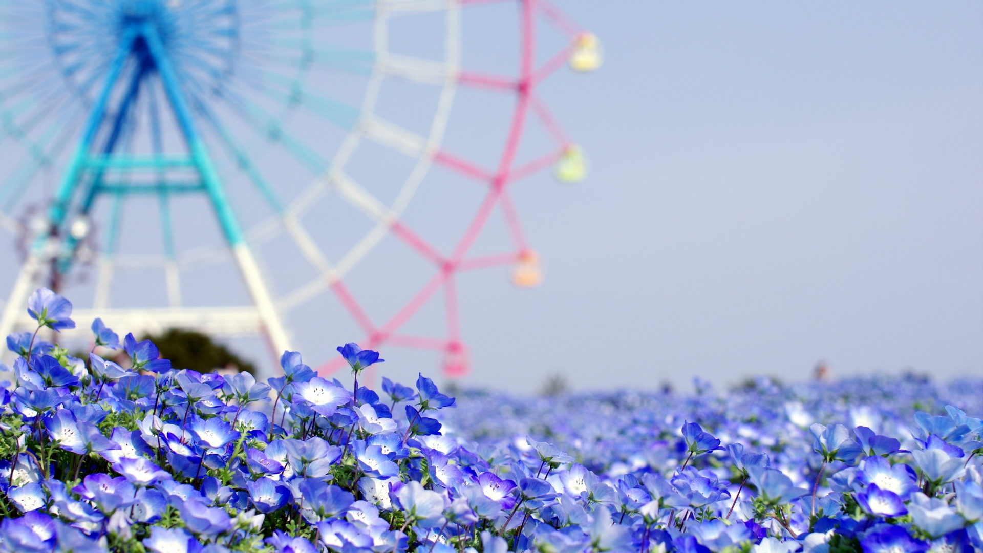 flower wallpaper tumblr 030
