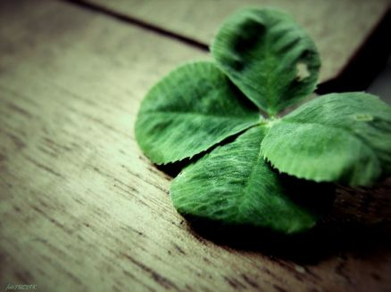 Four Leaf Clover Wallpapers