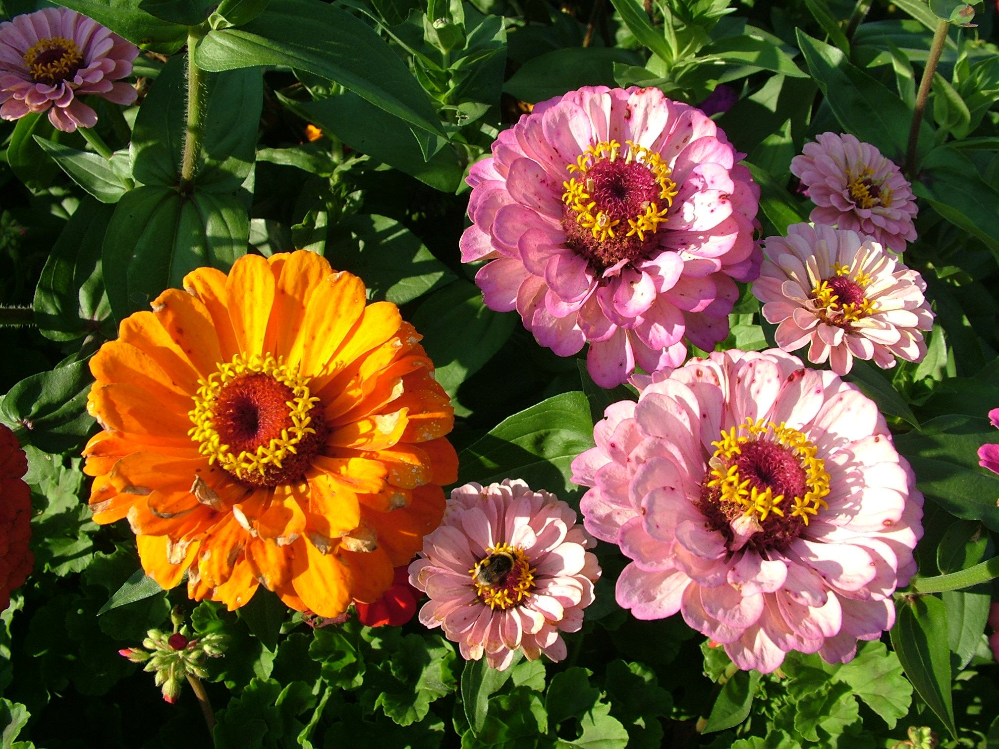 чтобы название огородных цветов с картинками образом можем проверить