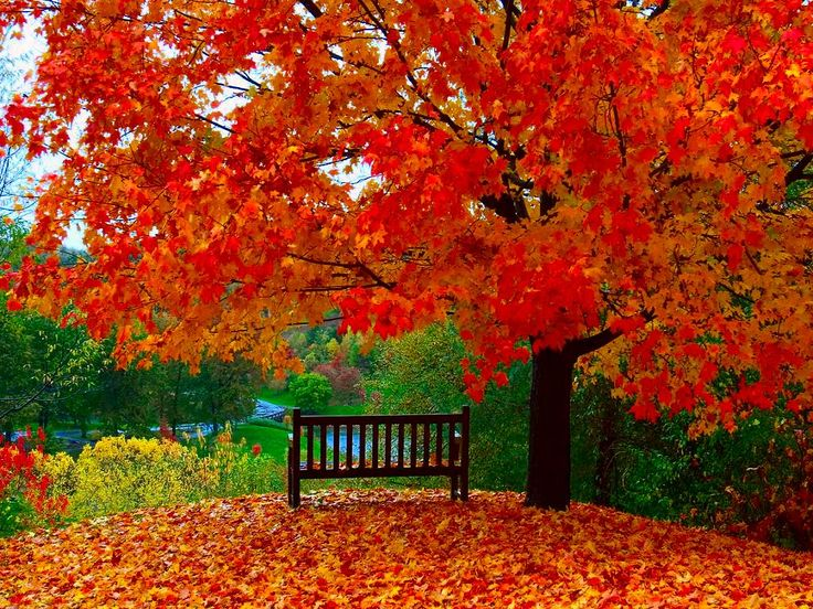 free desktop wallpaper fall scenes 020