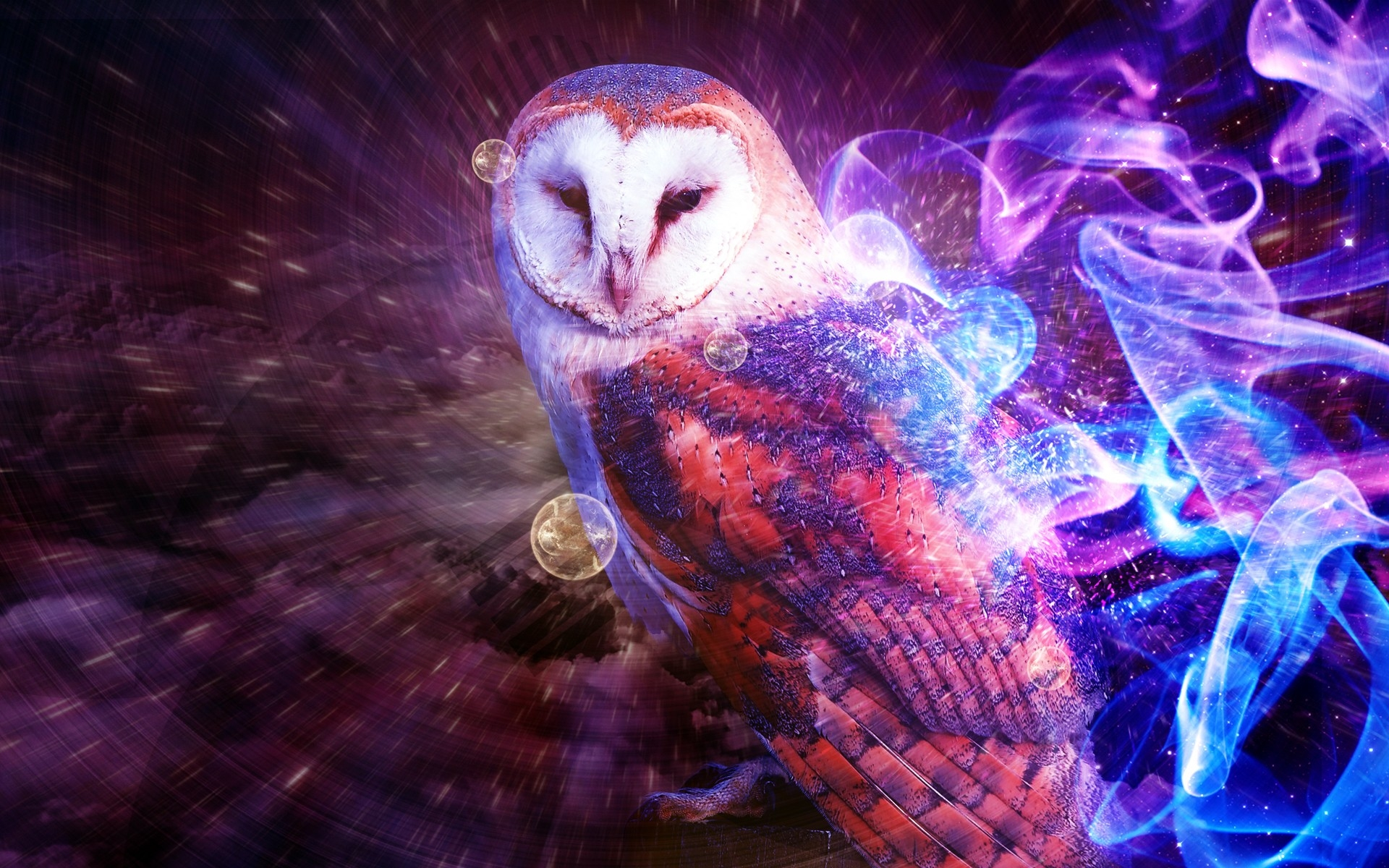 30 Pictures Of Owl In 100 Quality Hd