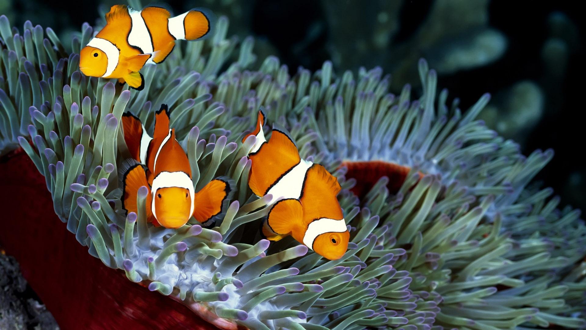 Tropical Fish Ipad Wallpapers Tropical Fish Pic