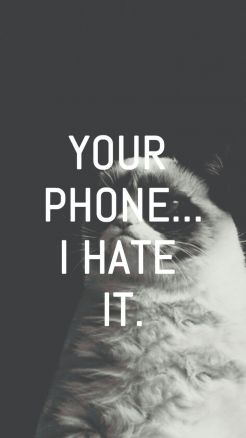 Wallpaper Funny Phone