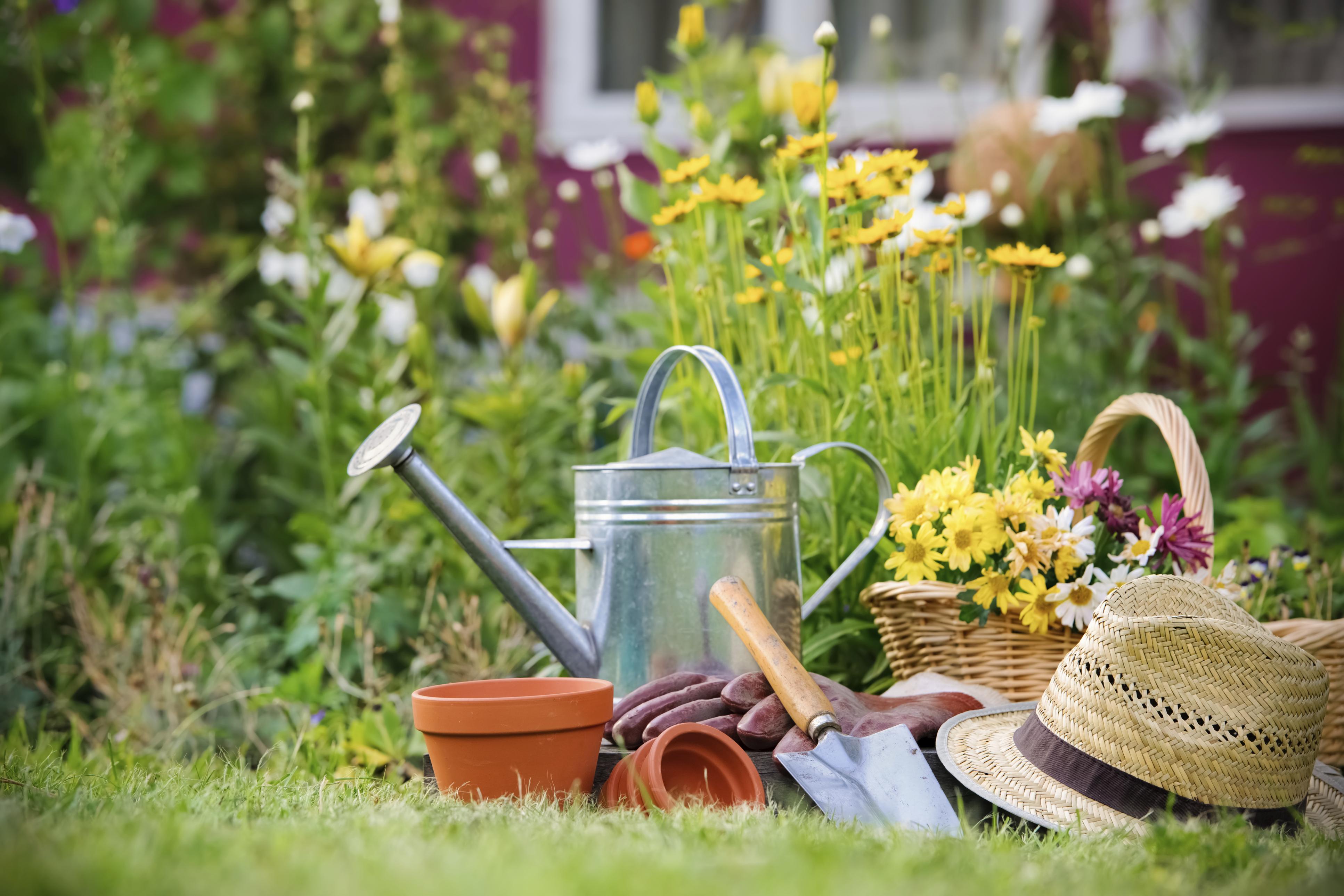 Goldwallpapers Com Uploads Posts Gardening Wall