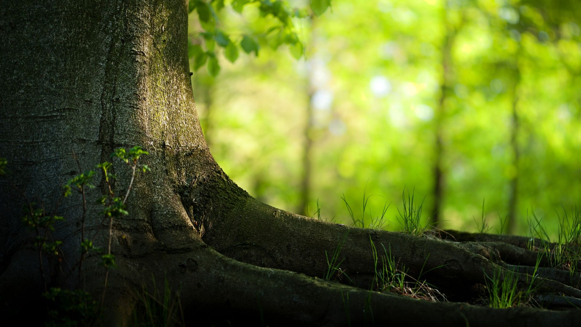 30 Beautiful Green Forest Wallpapers Full Hd