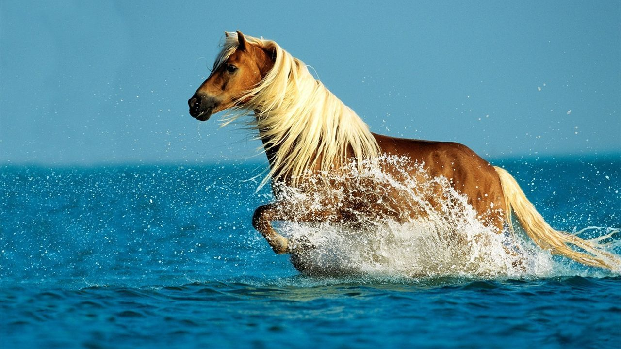Horse Computer Hqfx Pics Jaap Fallanche