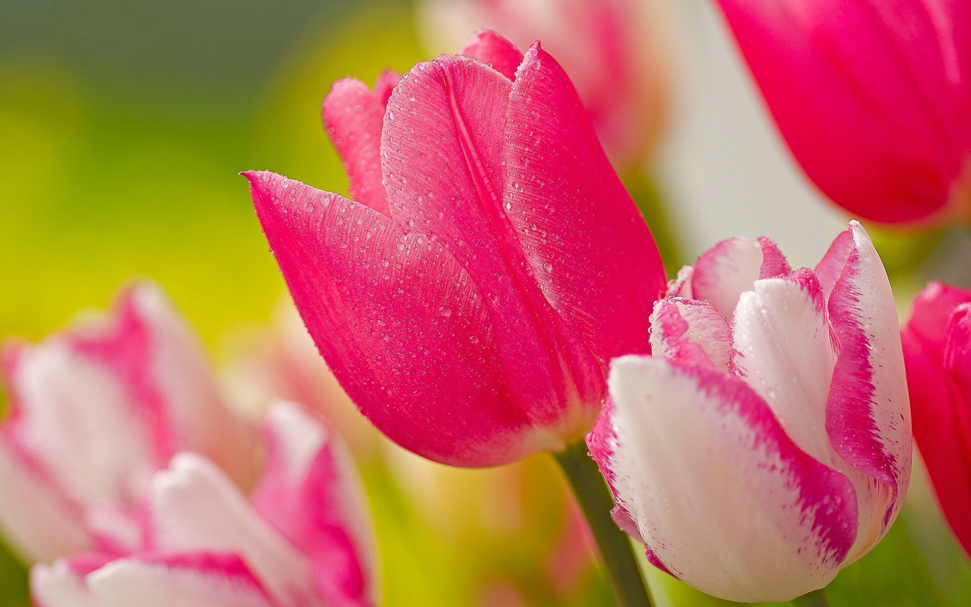Free Download Newest Hot Pink Flower Images