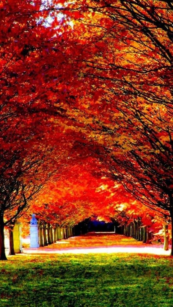 Beautiful Nature Wallpaper 4k Hd 1 Wallpaper