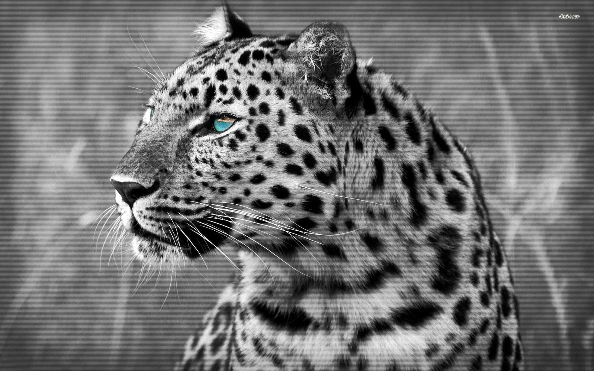 leopard-wallpapers