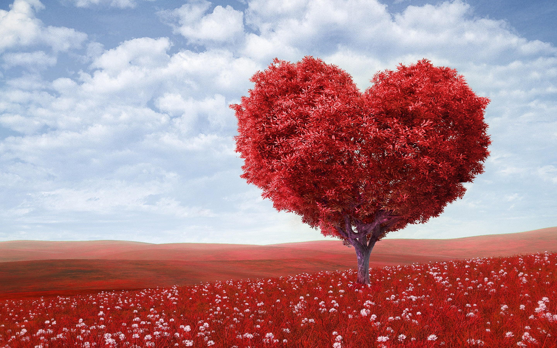 15 High Resolution Love Wallpapers Friderik Manass