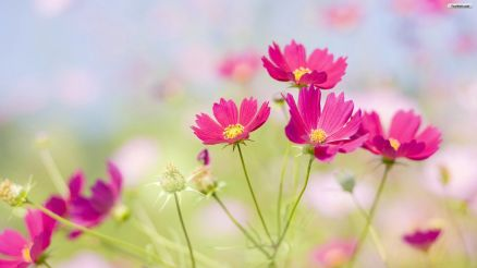 Beautiful Flowers Wallpaper