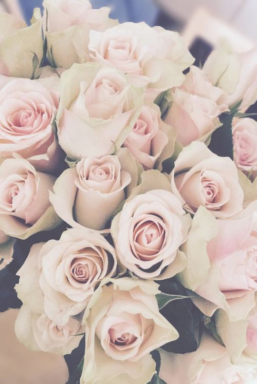pink and white roses wallpaper 020
