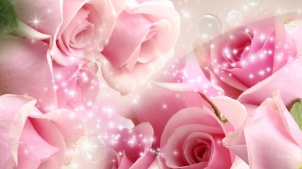 Pink And White Roses Wallpaper HD