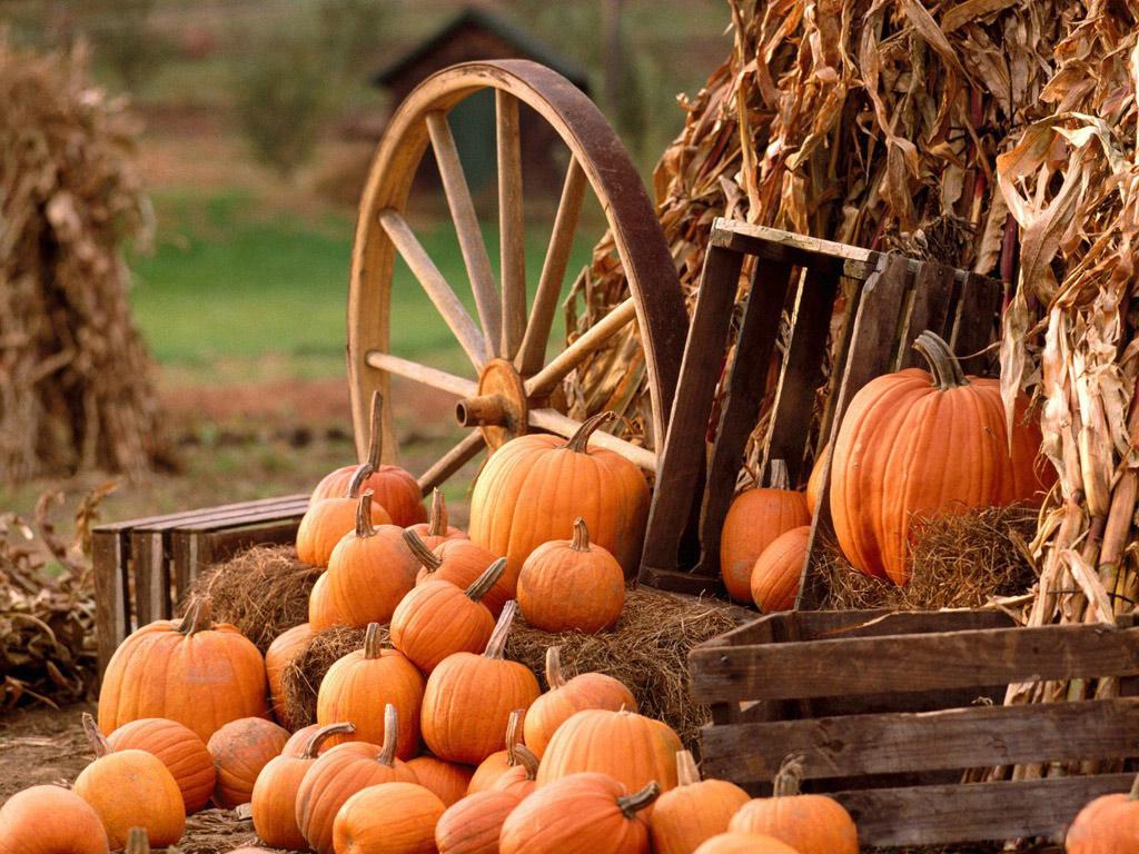 Pumpkin Fall Photos Gallery 590269680