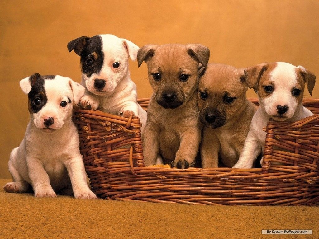 puppies-backgrounds