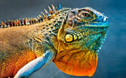 Images Of Reptile