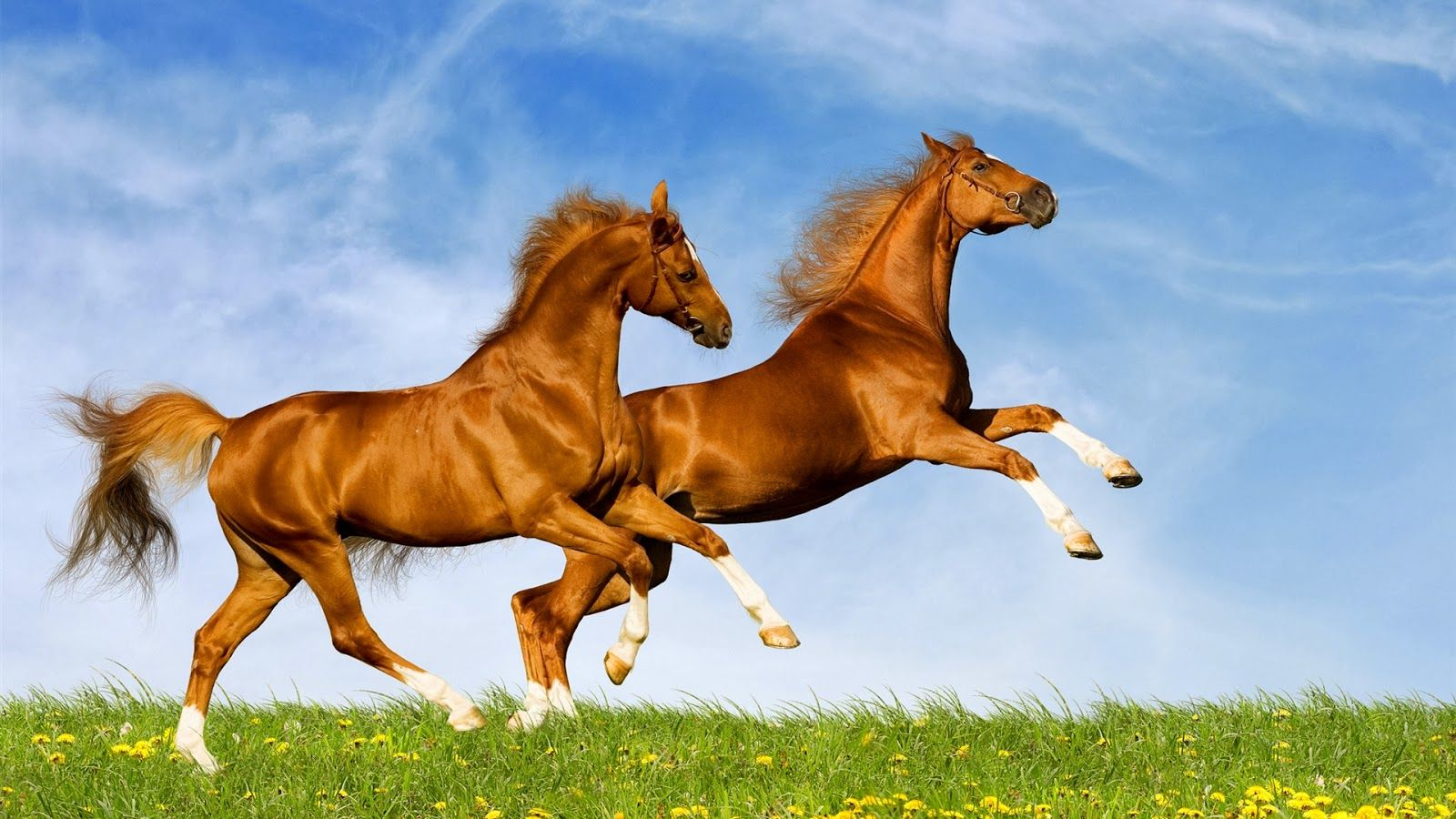 Seven Horse Wallpaper Download Wall Giftwatches Co